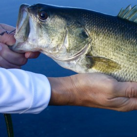 Bass Fishing Tricks To Use Now